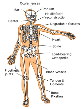Diagram of human body with labeled locations for biomaterial applications, such as ocular lenses and prosthetic joints.